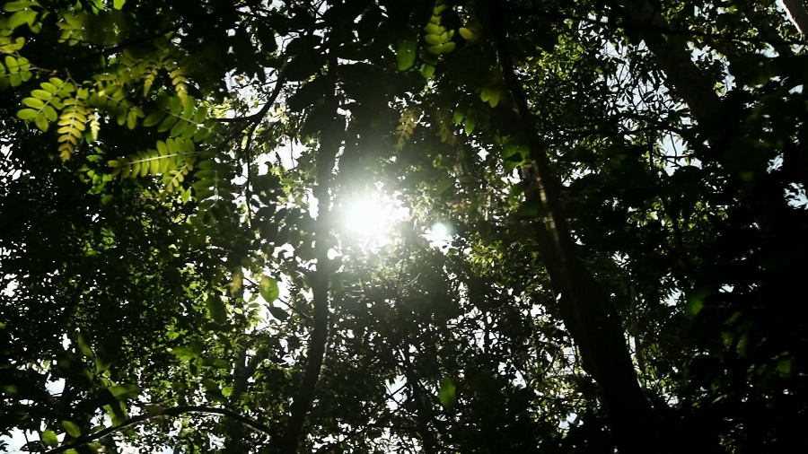 The Amazon Soya Moratorium, The Forest Solutions